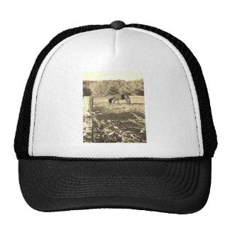 Sepiaton Brownpferd und -zaun Cap
