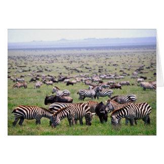 Serengetti Plains voll von den Herden von Zebras Karte