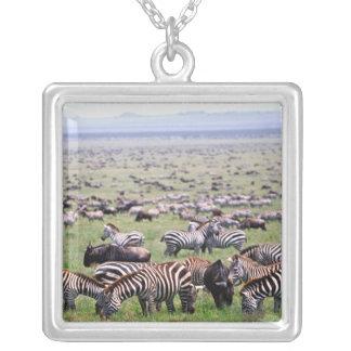 Serengetti Plains voll von den Herden von Zebras Versilberte Kette