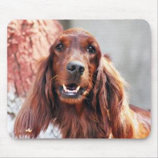 Setter-Hund Mousepads