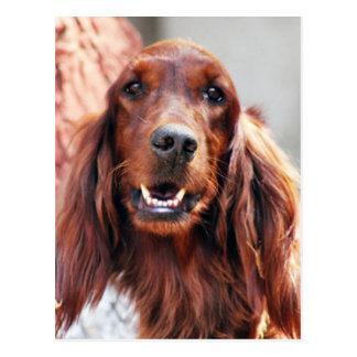 Setter-Hund Postkarte