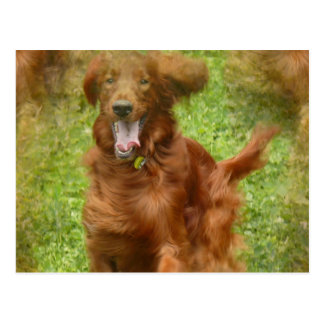 Setter-Hundepostkarte Postkarte