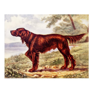 Setter-Illustration 1900 des sportlichen Hundes Postkarte