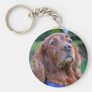 Setterhundeschönes Fotoporträt, Geschenk Schlüsselanhänger