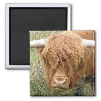 Shaggy Hochland-Kuh Quadratischer Magnet