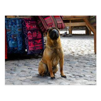 Shar Pei Hund, Ollantaytambo, Peru Postkarte