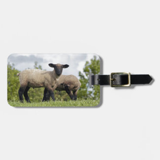 sheep kofferanhänger