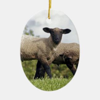 sheep ovales keramik ornament