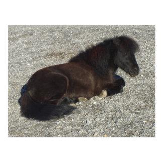 Shettland Pony-Miniaturpferdestallions-Tier Postkarte