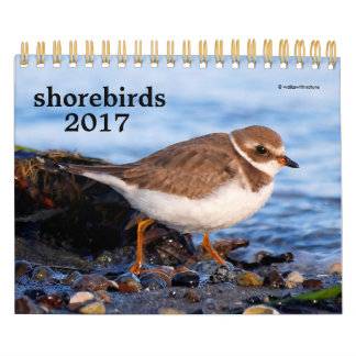 Shorebirds 2017 kalender