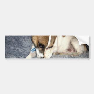 Shy_Fox_Terrier, _ Autoaufkleber
