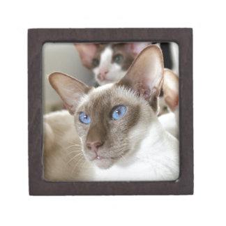 Siamesische Katzen-Haustier-Tiere Kiste