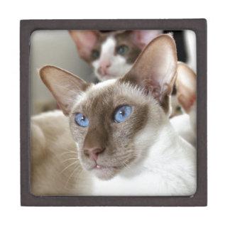 Siamesische Katzen-Haustier-Tiere Schachtel