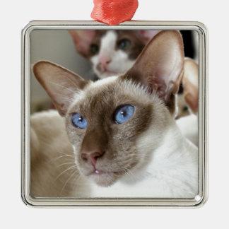 Siamesische Katzen-Haustier-Tiere Silbernes Ornament