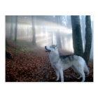 Siberian Husky - Postkarte