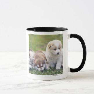 Sibirischer Husky; Eine Funktionshundezucht das- Tasse