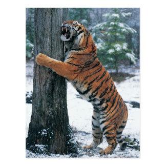 Sibirischer Tiger (der Pantheratigris altaica) Postkarte