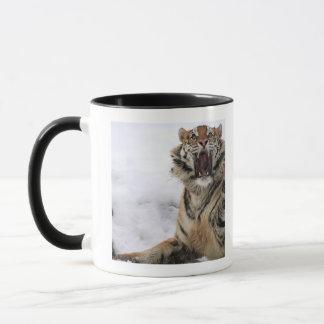 Sibirischer Tiger (der Pantheratigris altaica) Tasse
