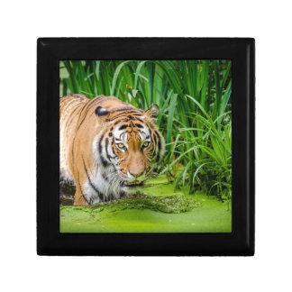 Sibirischer Tiger Geschenkbox