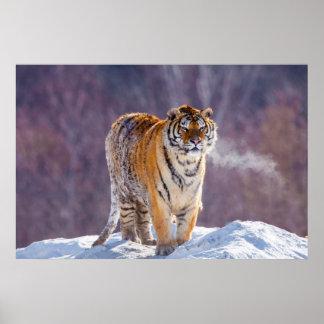 Sibirischer Tiger im Schnee, China Poster