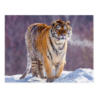 Sibirischer Tiger im Schnee, China Postkarte