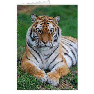 Sibirischer Tiger Karte