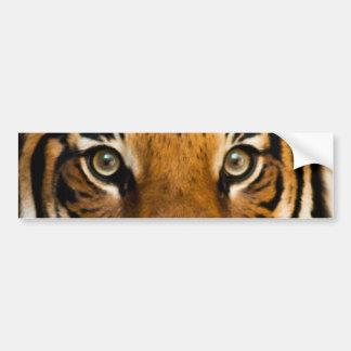 Sibirischer Tiger mustert Autoaufkleber