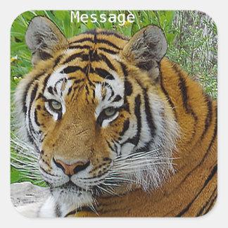 Sibirischer Tiger-Nahaufnahme-Foto des Gesichtes Quadratischer Aufkleber