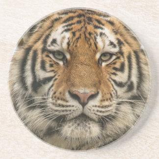 Sibirischer Tiger Sandstein Untersetzer