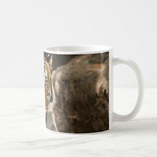Sibirischer Tiger-Starren Kaffeetasse
