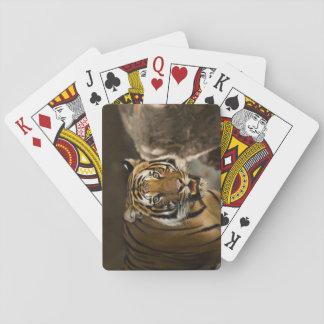 Sibirischer Tiger-Starren Spielkarten