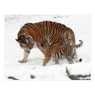Sibirischer Tiger und CUB Postkarte