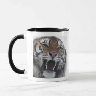 Sibirischer verwirrender Tiger Tasse