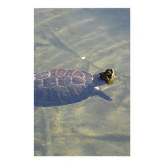 Sich hin- und herbewegende Schildkröteschwimmen in Briefpapier