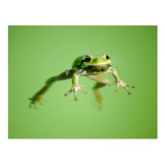 Sich hin- und herbewegender Frosch im Postkarte