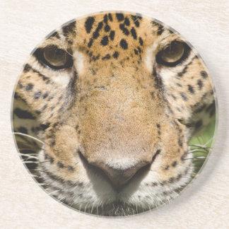 Sichernder Jaguar in der Dschungeleinschließung Untersetzer