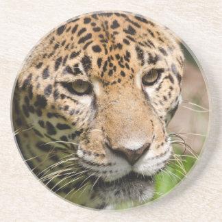 Sichernder Jaguar in Dschungeleinschließung 2 Sandstein Untersetzer