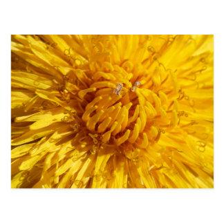 Sie benötigen wenig Gelb in Ihrem Leben Postkarte