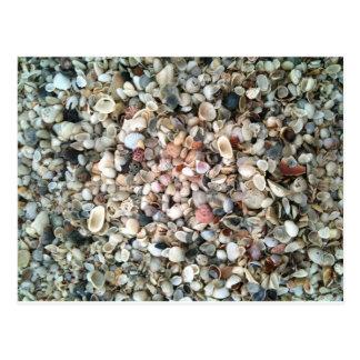 Sie verkauft Muscheln auf dem Strand in Florida Postkarte