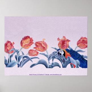 Sieben Papageien, durch Darlene P. Coltrain Poster