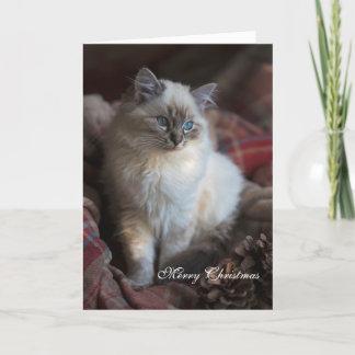 SiegelTabby Ragdoll Weihnachtskarte