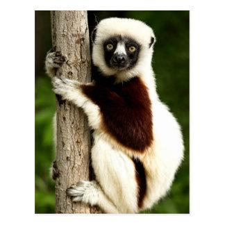Sifaka Lemur in Madagaskar-Wald Postkarte
