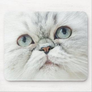 Silber-Perser mit blauen Augen Mousepad