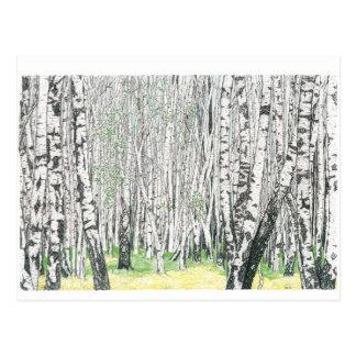 Silberne Birken-Holz - Postkarte