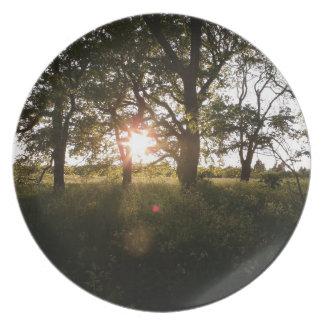 Silhouette-Bäume mit Sonnenlicht-Bäumen an der Melaminteller