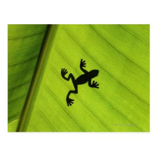 Silhouette des Frosches durch Bananenblatt Postkarte