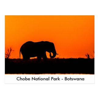 Silhouette eines Elefanten Stier am Postkarte