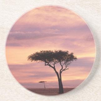 Silhouettebild des Akazienbaums am Sonnenaufgang Untersetzer