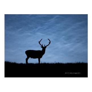 Silhouettierter Rotwild-Hirsch nachts Postkarte