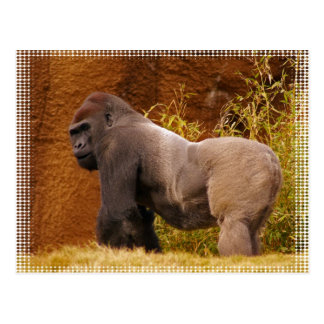 Silverback-Gorilla-Foto-Postkarte Postkarte